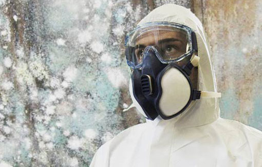 mold-removal-service