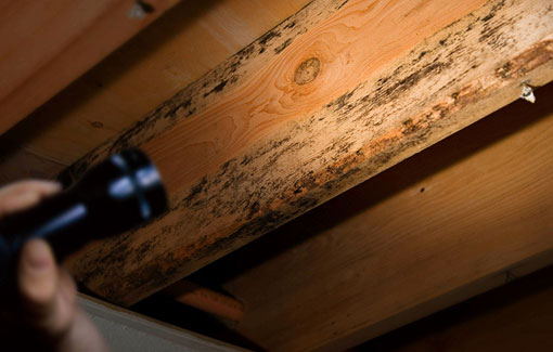 termite-inspection-services